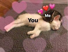 Comics Spideypool y Stony – Funny Memes Cute Cat Memes, Cute Love Memes, Funny Memes, Cute Love Pics, Dankest Memes, Funny Quotes, Animals And Pets, Funny Animals, Cute Animals