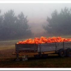 Pumpkin wagon...I can smell the chill in the air, the musty scent of Autumn...