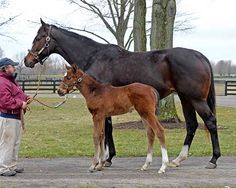 Rachel Alexandra and her foal, Jesse's Dream.  Doesn't even look like a broodmare . . .