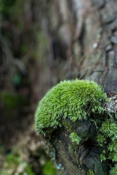 moss | nature photography