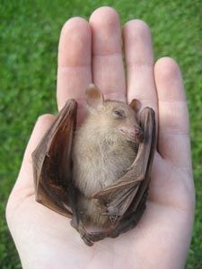 WILDLIFE FRIENDLY FENCING — Bats_Rule! Help Save WildLife