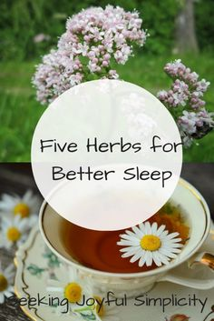 Do you have trouble sleeping? I experienced chronic insomnia for years and it was devastating. Tossing and turning all night, rising each morning exhausted and irritable, sleep problems can make us a little crazy. Lack of sleep has long term affects on our health, our relationships, and the quality of our lives. Using simple, gentle herbs for better sleep can offer profound relief. These herbs changed my life, and I believe they can help you too.