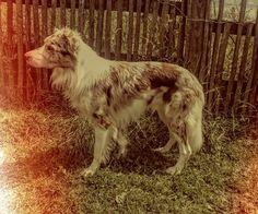 Rowan Rowan, Grandchildren, Dog Days, Dogs, Animals, Animales, Animaux, Pet Dogs, Doggies