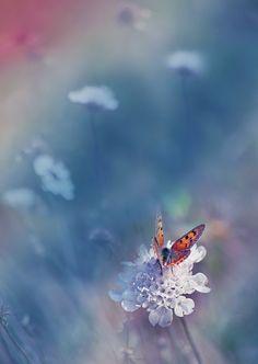 Butterfly by Juliana Nan