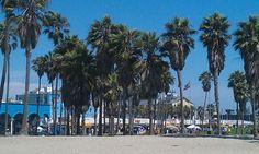 Palm Trees on Venice Beach, CA.