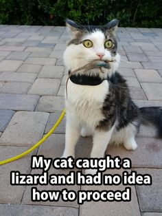 aaaaahahahahahaha!!!! my cat would bring it inside and put it in the dog's water. still alive.