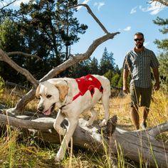 © Ruffwear Web Master Harness Brustgeschirr ideal für Wandertouren, zum Klettern, im Wasser und zur Mobilitätsunterstützung bei Hunde mit Handycap.