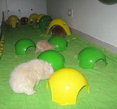 Even guinea pigs like the sputnik xl