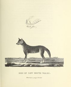 The voyage of Governor Phillip to Botany Bay : - Biodiversity Heritage Library