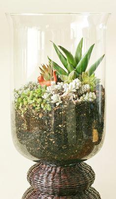 How to make a terrarium. Succulent Terrarium - Step 1
