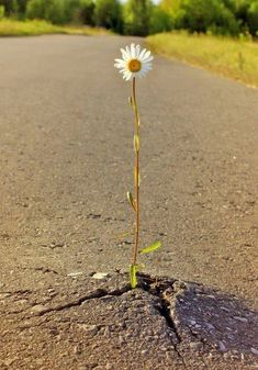 "IF THIS LITTLE FLOWER CAN MAKE IT, JUST THINK WHAT WE CAN DO???? TRUE MIRACLES ARE ALL AROUND ""US."""
