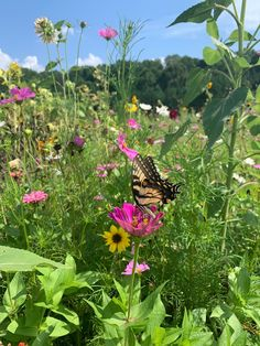 Check out this incredible picture of a butterfly visiting our sunflower field! laura_shanahan captured the insect landing on one of the zinnias in the #NCMApark.  Did you visit our sunflower field? Tag us in your photos from it (or any other spot at the NCMA)! Use #ArtNaturePeople. We pick our favorite every Tuesday. Nc Map, Butterfly Pictures, Sunflower Fields, Happy Trails, Walking In Nature, Zinnias, Pavement, Art Sketchbook, Landing