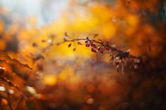 https://flic.kr/p/Gn9zvz | Autumn | Thanks for all visits, comments & Favs! I would be greatful if you follow me in flickr. Have a nice day!   NO images//awards//graphics please! © 2017, All Rights Reserved.    Explore - macro ||  Facebook || 500px  ||  Twitter  ||   1x