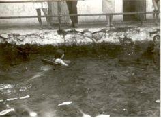 Saona 1963