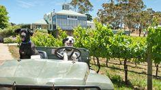 Hahndorf Hills Winery, Adelaide Hills