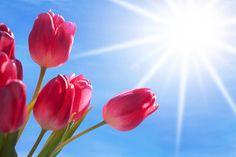May brings flowers and sunny spring weather. It also marks Skin Cancer Detection and Prevention Month. To learn sun safety tips and skin cancer facts click through to the CDC for more information.