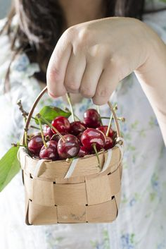 New fruit photography cherry beautiful Ideas Cherry Picking, Fruit Picking, Cherries Jubilee, Fruit Photography, Fruit Dishes, Fruit Party, New Fruit, Sweet Cherries, Fruit Displays