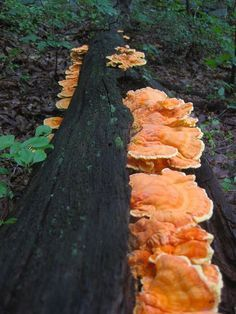 5 Easy to Identify Mushrooms for the Beginning Mushroom Forager