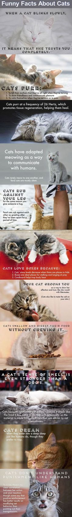 Funny Cat Facts Pictures, Photos, and Images for Facebook, Tumblr, Pinterest, and Twitter: