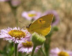 events at Rancho Santa Ana Botanic Garden in Claremont, CA.