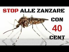 Liberarsi dalle zanzare con 40 centesimi - YouTube