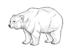 How to Draw a Bear by Monika Zagrobelna Of all the mammals grizzly bears are one of the easiest to draw-so you dont need expert skill to draw this animal realistically! Animal Sketches, Animal Drawings, Drawing Sketches, Drawings Of Bears, Grizzly Bear Drawing, Bear Sketch, Bear Paintings, Bear Tattoos, Nature Sketch