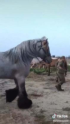 Funny Horse Videos, Funny Horse Pictures, Funny Horses, Horse Photos, Funny Animal Videos, Big Horses, Cute Horses, Pretty Horses, Horse Love