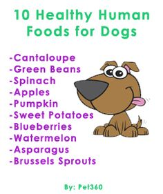 10 Healthy Human Foods For Dogs. Snacks for the fur kiddos.