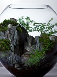 Beautiful Terrarium Ideas What Is A Terrarium? A terrarium is essentially an enclosed environment for growing plants. Garden Terrarium, Succulent Terrarium, Succulents Garden, Planting Flowers, Terrarium Ideas, Terrarium Scene, Terrarium Centerpiece, Air Plants, Indoor Plants