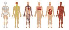 human body - Buscar con Google
