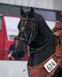 Hand-crafted browbands, halters & other leather tack for your horse. High fashion for horse and rider. Horse Head, Horse Tack, Post Apocalyptic Costume, Fancy Schmancy, Headstall, Horse Breeds, Saddles, Clothes Horse, Beautiful Horses