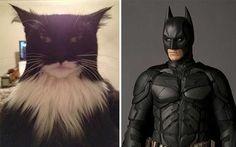 cosas que se parecen a otras, gato que se parece a batman