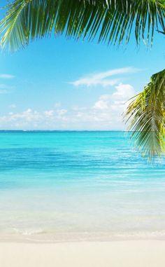 Tropical Beaches With Palm Trees Beach Pink, Ocean Beach, Phuket, Paradis Tropical, I Love The Beach, Photos Voyages, Tropical Beaches, Beaches In The World, Beach Scenes