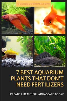 In this blog post, I am going to show the best aquarium plants that don't need fertilizers. All the plants are very hardy and beginner-friendly. #aquarium #aquariumplants