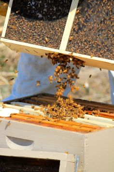 They pour out like water and immediately search out their queen; http://www.theprairiehomestead.com/2014/05/get-started-honeybees.html#sthash.30ScN1Pb.dpbs