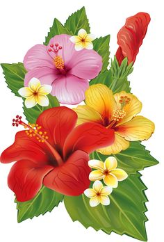 EPS Vectors of Arrangement from hibiscus flowers - Search Clip Art, Illustration, Drawings and Clipart Vector Graphics Images Tropical Flowers, Hawaiian Flowers, Tropical Art, Hibiscus Flowers, Lilies Flowers, Exotic Flowers, Flowers Garden, Purple Flowers, Watercolor Flowers