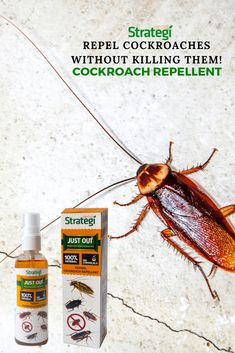 Our Herbal Cockroach Repellent Spray is natural and eco-friendly. Spraying it in the Kitchen and Bathroom areas for 10 days will repel cockroaches for Cockroach Repellent, Cedrus Deodara, Cockroach Control, Azadirachta Indica, Herbal Extracts, Natural Oils, Herbalism, Eco Friendly, Shop