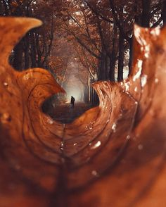 25 Gorgeous Creative Photography You Never Think Before Autumn Photography, Creative Photography, Amazing Photography, Portrait Photography, Photography Aesthetic, Portrait Art, Micro Photography, Photography Projects, Landscape Photography