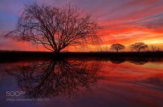 On Sunset Pond by MarkVeePhotography #nature #travel #traveling #vacation #visiting #trip #holiday #tourism #tourist #photooftheday #amazing #picoftheday