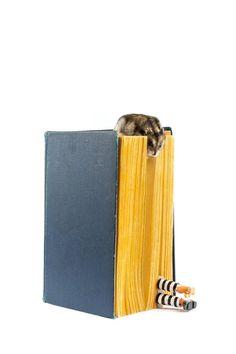 Mis libros necesitan estos extraños separadores.