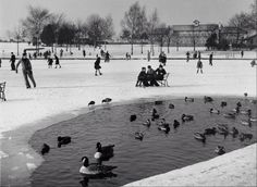 Some skaters on the pond at Rowheath Pavilion!