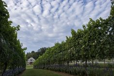 In Virginia wine country, where to have some great food with your drinks - The Washington Post