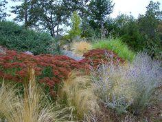 drought tolerant landscaping | Drought Tolerant Landscape
