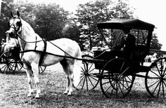 Black and White Doctor Buggy Horse Driving