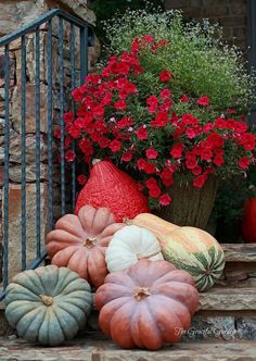 Red flower garden with elegant pumpkins, lovely display for fall art halloween Pumpkin Colors, Autumn Decorating, Porch Decorating, Decorating Ideas, Welcome Fall, Arte Floral, Autumn Garden, Fall Harvest, Fall Pumpkins