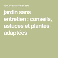 jardin sans entretien : conseils, astuces et plantes adaptées