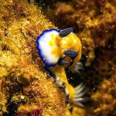 Beautiful Sea Creatures, Sea Slug, Oahu Hawaii, Underwater Photography, Pacific Ocean, Scuba Diving, Australia, Animals, Slug