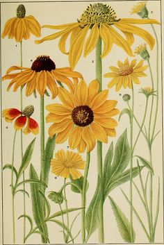 """Rocky Mountain flowers : an illustrated guide for plant-lovers and plant-users"""" (1920)"""