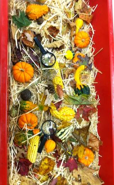 Fall sensory bin ~ have students fill with items they find for Autumn by cathy Fall Sensory Bin, Toddler Sensory Bins, Sensory Tubs, Sensory Boxes, Sensory Play, Fall Preschool Activities, Sensory Activities, Toddler Activities, November Preschool Themes
