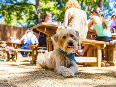 10 of the most dog-friendly hangouts in Austin